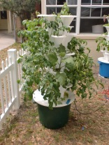 """Coalition Hydroponic Garden Tower"" ""Hydroponics for the Homeless"""